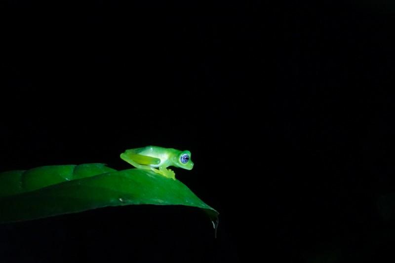 monteverde-costa-rica-5